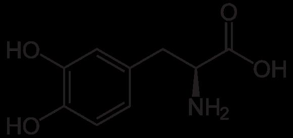 580px-3,4-Dihydroxy-L-phenylalanin_(Levodopa).svg