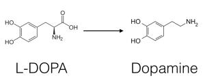dopa-to-dopamine
